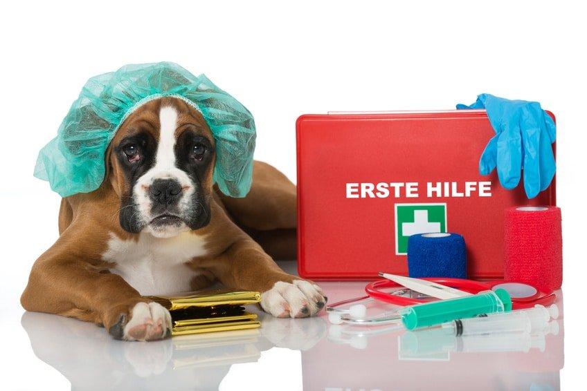 Hundeopversicherung