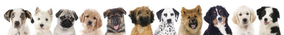 Hundekrankenversicherung für Welpen