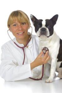 Hunde Krankenversicherung trotz Vorerkrankung