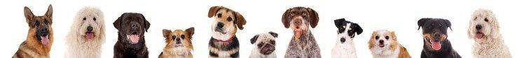 Hunde OP Versicherung Checkliste
