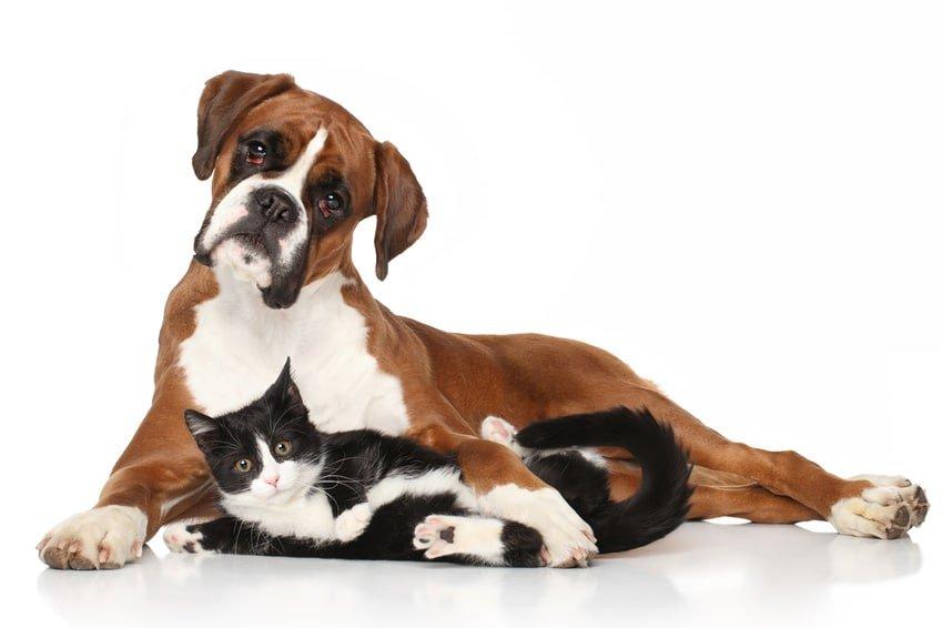 Mit der Hunde-OP Versicherung für Boxer lässt sich das Leben genießen!