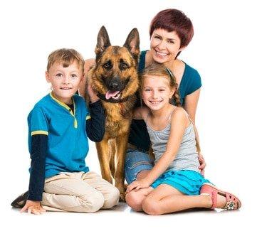 Hunde-OP Versicherung für Schäferhund