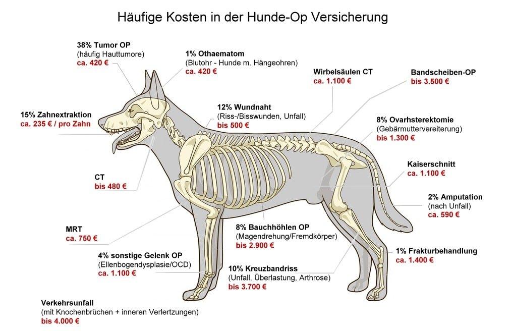 Häufigsten Hundekrankheiten