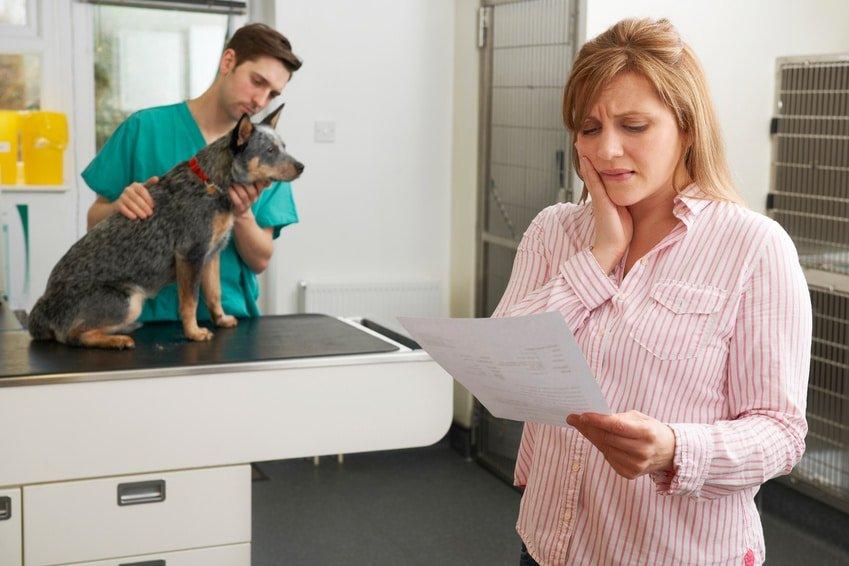 Hunde OP Versicherung ohne Selbstbeteiligung