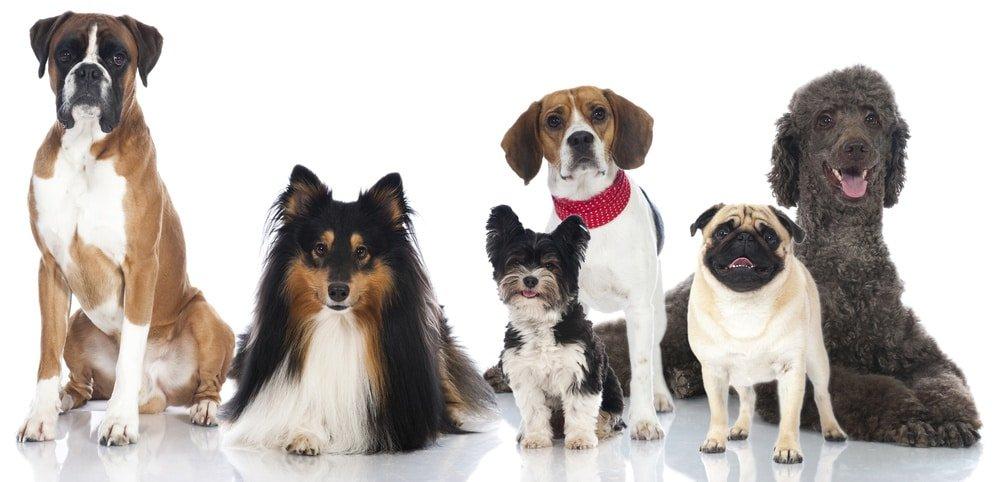 Hunde OP Versicherung ohne Altersbegrenzung