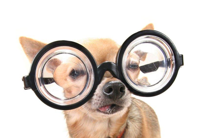 Hunde OP Versicherung trotz Vorerkrankung